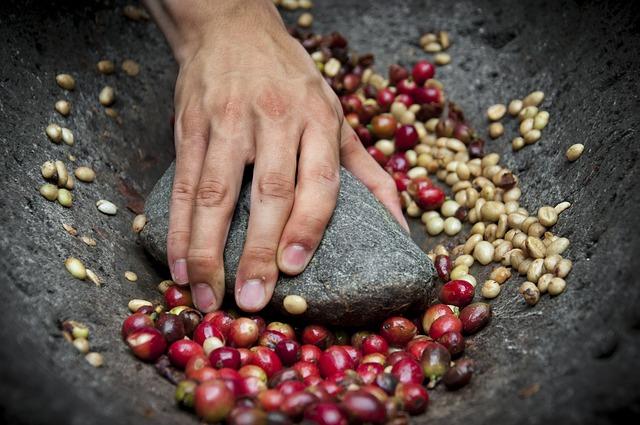 Zrna kávy před pražením